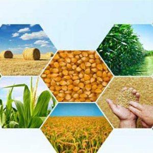 واردات مواد اولیه غذائی